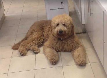 Tired Finn (video)