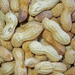 Nasal vaccine suspends peanut allergies in mice. Could humans be next?