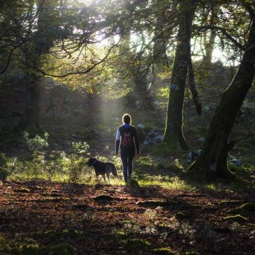 'Forest bathing' is great for your health. Here's how to do it