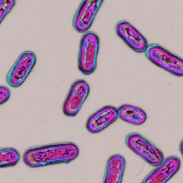 Le Clostridium difficile recule dans les hôpitaux du Canada