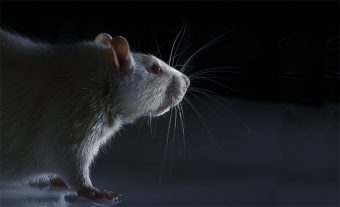 Software beats animal tests at predicting toxicity of chemicals