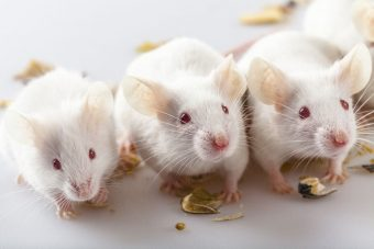 Scientists accidentally discover drug that prevents weight gain in mice