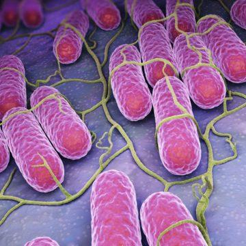 Des bactéries résistent de mieux en mieux aux gels hydroalcooliques dans les hôpitaux