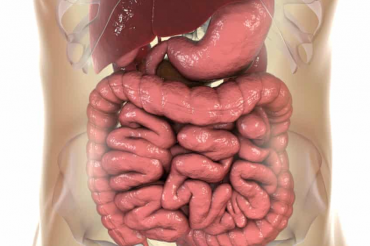 Faecal transplant researchers identify 'super-pooper' donors