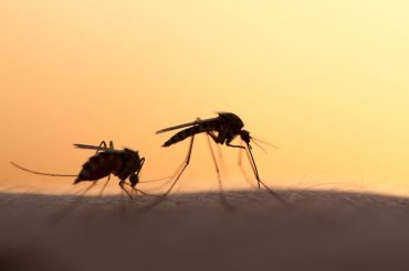 Why do mosquitoes love biting some people more than others?