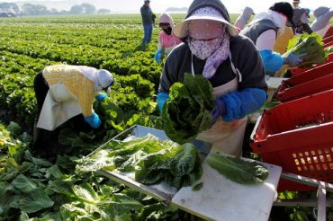 Avoid romaine lettuce from Salinas, Ca., Canadian officials warn